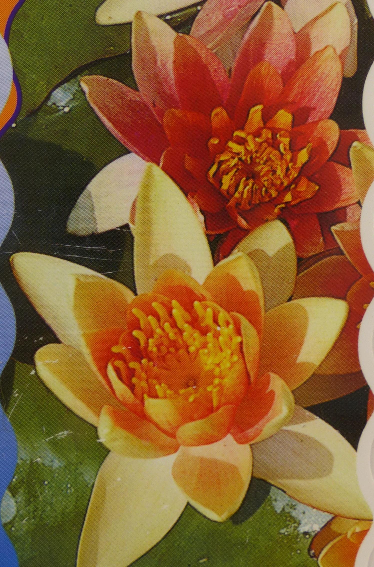 Leknín 'Chrysantha' - oranžový